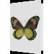Felicitare: Fluture