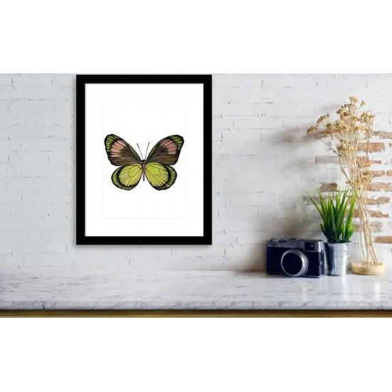 Tablou: Fluture